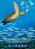 poster_turtle